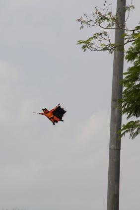 Bat-Kite!