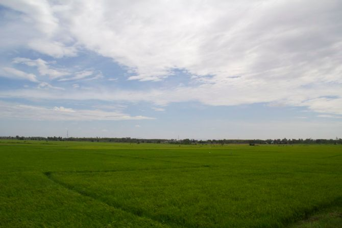 Grass Farming