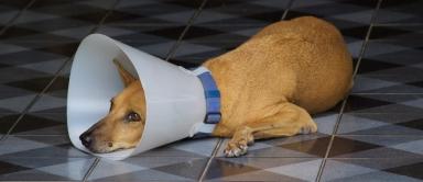 Sad dog is sad