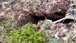 Ant Cave